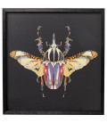 Cuadro Art Beetle 60x60cm
