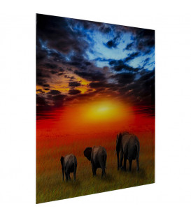 Cuadro cristal Elefantes en la Sabana 100x100cm