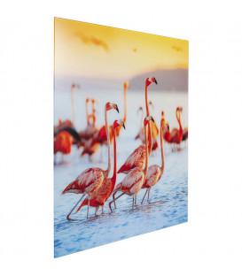 Cuadro cristal Flamingo Family 80x80cm