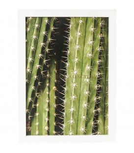 Cuadro Cactus 45x33cm