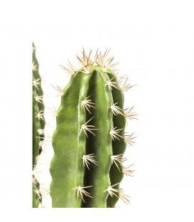 Planta decorativa Cactus Pot 202cm