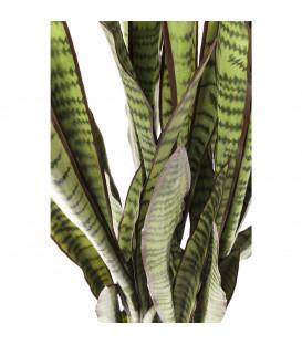 Planta decorativa Sansewieria 155cm