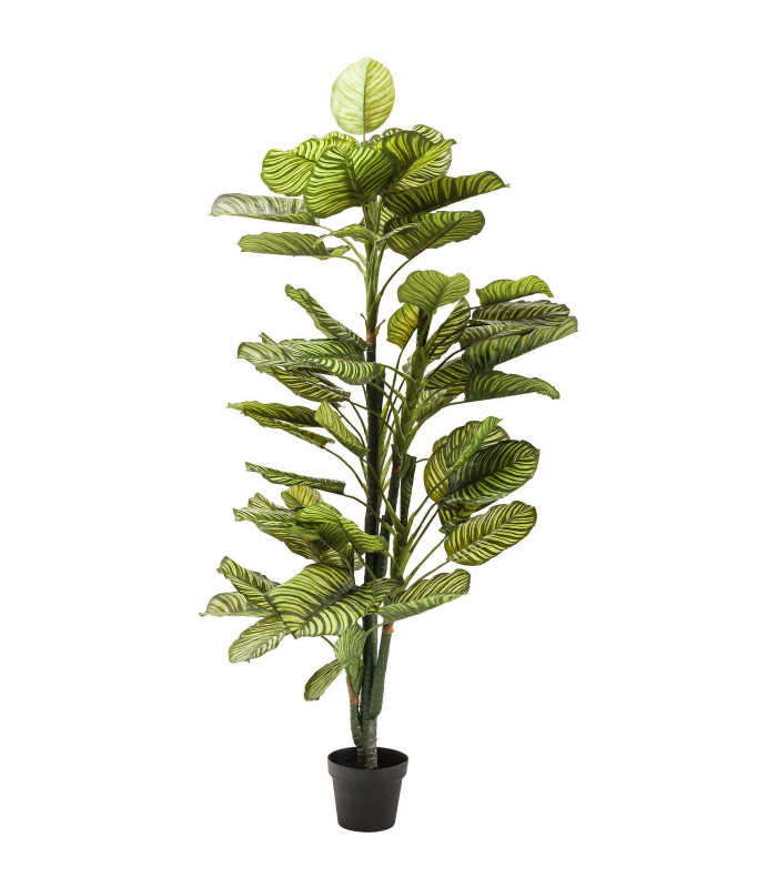planta decorativa dieffenbachia 160cm kare design